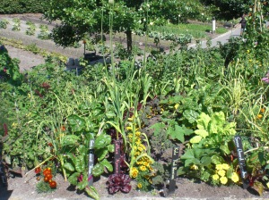 The Unexpected - Eden Project vegetables!