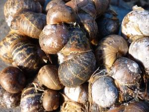 Yuk! Snails.