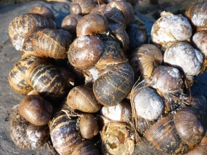 Snails, again