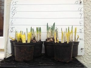 Bulbs from the Workshop (February 9th)