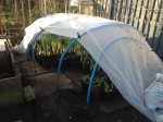 Looking into the polytunnel February 17th