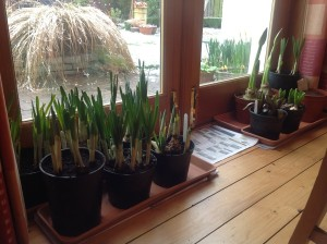 Update - bulbs brought in out of the cold