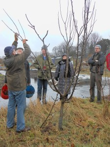 Winter pruning demonstration