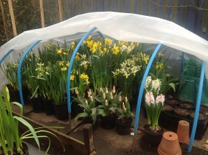 Polytunnel blooms