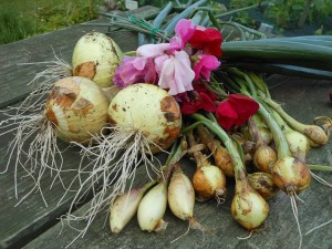 Onions Shallotts and Sweet Peas