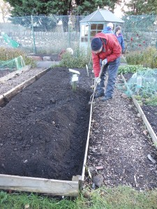 Clearing away the soil on the raised beds