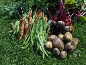 Veg pickings