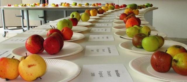 Apple identification - Copy