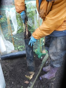 Gobo being harvested from inside a length of pipe
