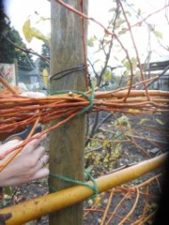 Knotting the Willow