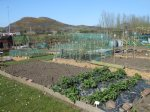 An overall view of the allotment