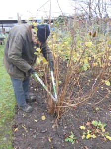 Pruning the Hazel
