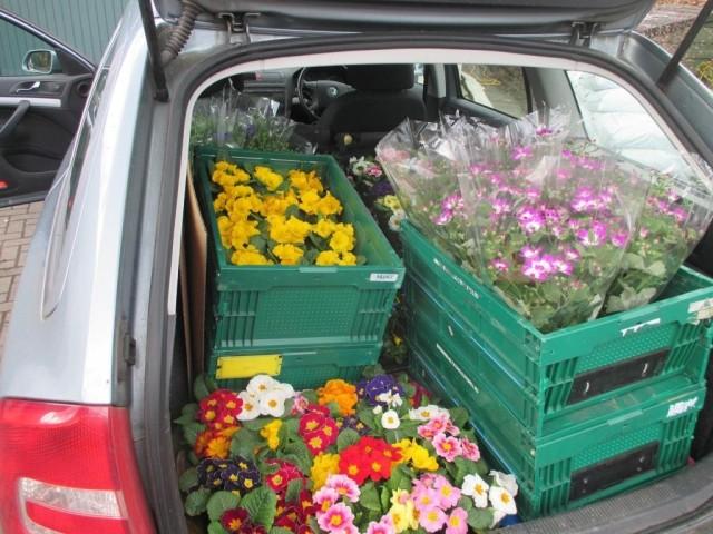 Fundraising plants sale ahoy!