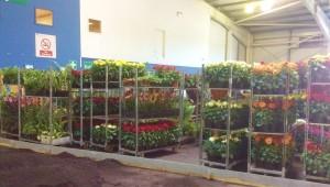 Jon's plants waiting