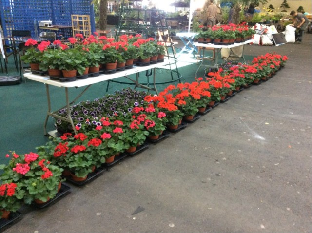 The plants from Pentland Plants have arrived!