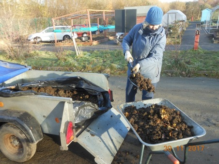 Barrowing manure